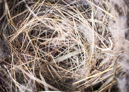 bird nest: bird nest with empty for background