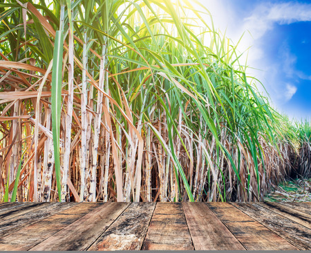 wood table top with sugarcane field background
