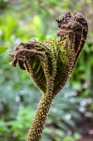 dying  dry plant full of spines in Rombergpark, Dortmund