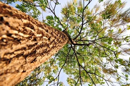 ascendant: Under Tree