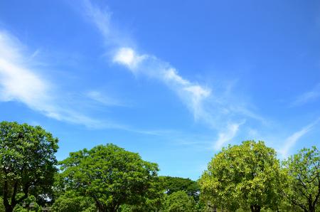 Tree Landschaft