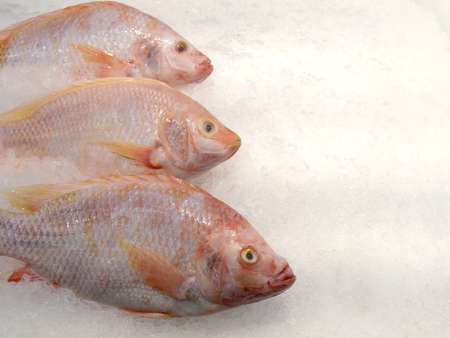 Red tilapia fish on ice in the market