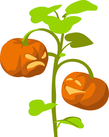 cucurbit: Scary Jack O Lantern halloween pumpkins Illustration