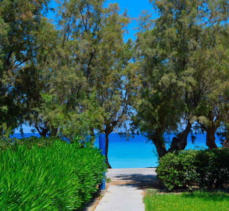 Views of the turquoise sea through the trees
