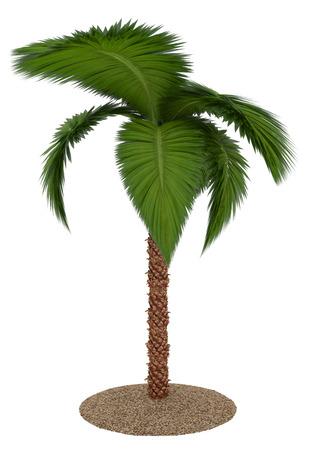 Palme auf wei?em Hintergrund Standard-Bild