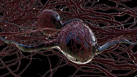 threadlike: Sphere with thread-like appendages. Blood cells