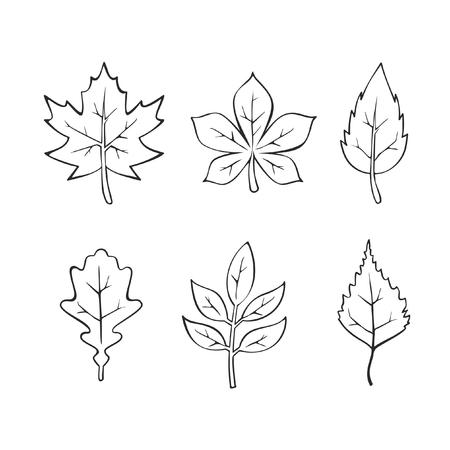 Vector drawn leaves Illustration