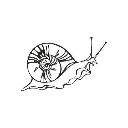 Monochrome vector snail