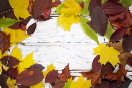 Color autumn leaves on white wooden background Imagens