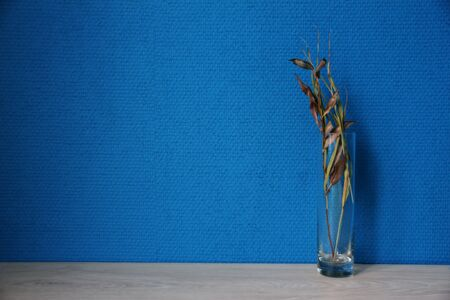 Glass vase with dry branches with blue wallpaper Imagens