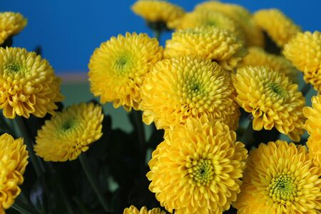 Bouquet of small yellow chrysanthemums
