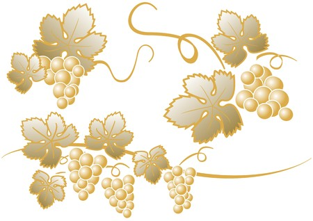 golden cluster of grapes Stock Vector - 7574655