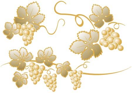 sommelier: oro racimo de uvas