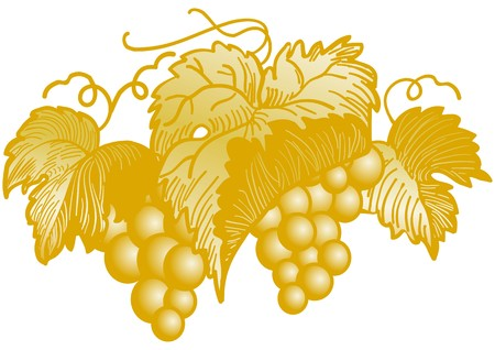 Golden cluster of grapes Vector