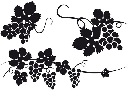 distilled: grapes Illustration