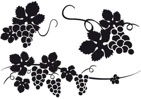 raisins Vecteurs