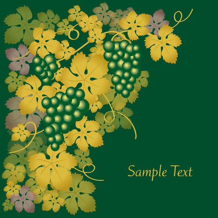grapes green Vector
