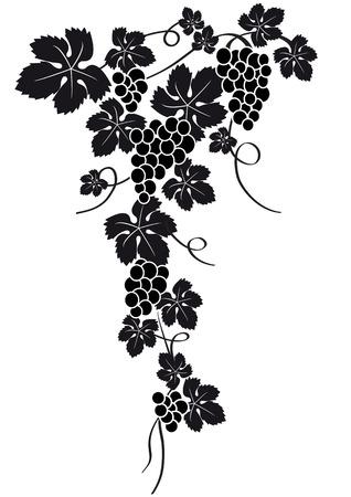 sommelier: silueta de uvas  Vectores