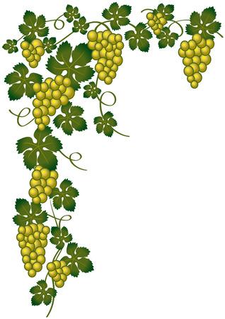 sommelier: oro de uvas y verde  Vectores