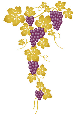 grapes gold Vector