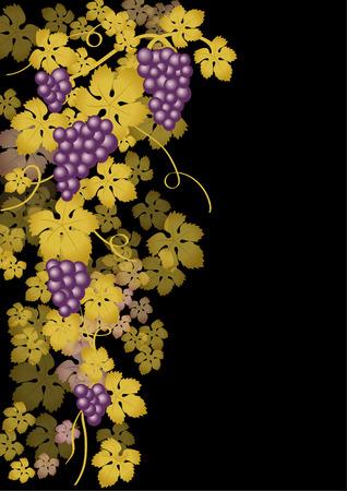 grape crop: Grapes purple
