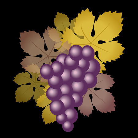Grapes purple Vector