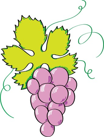 grapes Stock Vector - 7734532