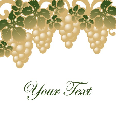 gold and green grapes Vector