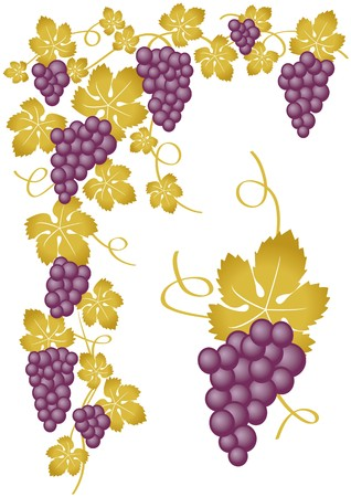 grapes gold Stock Vector - 7783278