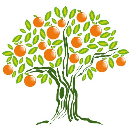valencia orange: orange tree