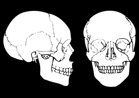 parietal: skull