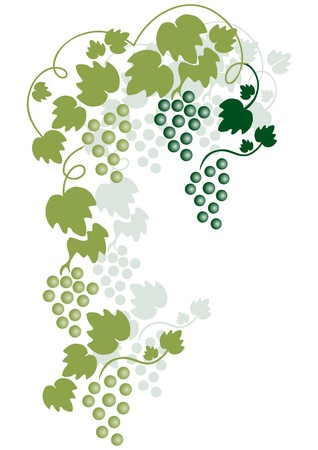 wine grower: green grapes