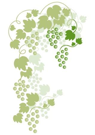 녹색 포도