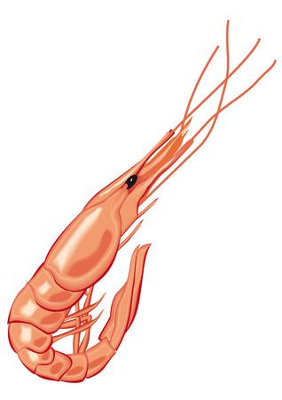 seafood Illustration