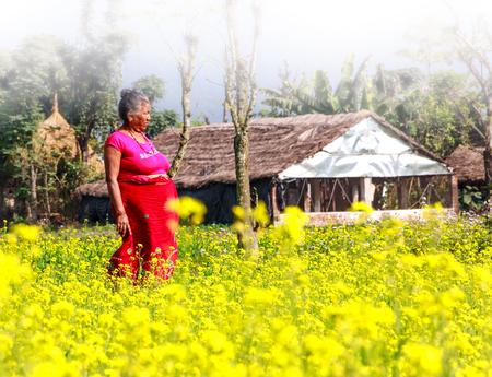 nepali: Chitwan,Nepal - Dec 11,2015: A Nepali woman in the mustard field in early foggy morning near the house in the village of Chitwan. Editorial
