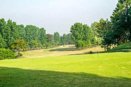 caddie: Rows of Trees on a beautiful green grass field background.