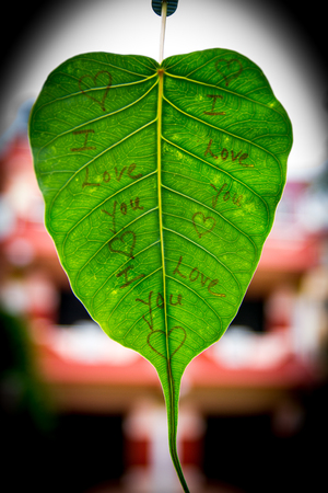 i love you sign: I Love You Sign written on the green leaf .