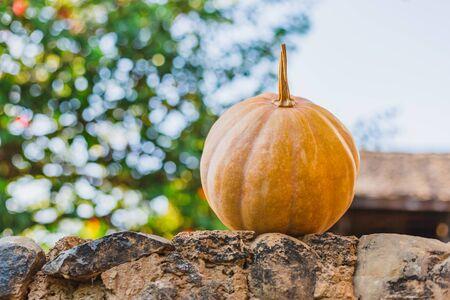 Fall Pumpkin,Fall Harvest,Yellow pumpkin for  creative use. Reklamní fotografie