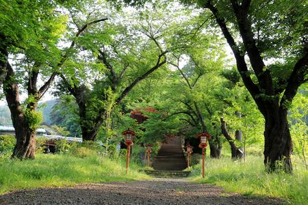 kawaguchi ko: Walkway to Chureito Pagoda, Arakura Sengen Shrine in Japan Stock Photo