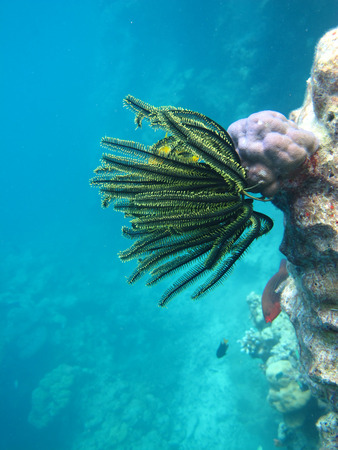 Underwater Lives with Sea Anemone and fish photo