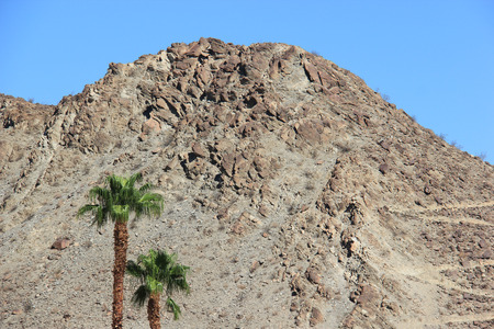 Palm Trees with Desert Mountain in background photo