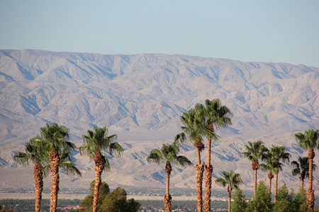 Palm Trees with Desert Mountain in background Stock Photo