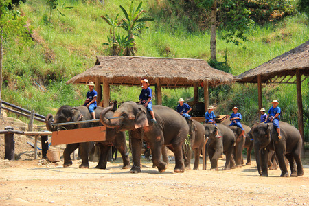 Elephant Parade at Maesa Elephant Camp, Chiangmai, Thailand on April 29, 2013 Editorial