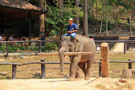 hugh: Elephant Lifting a Log in Chiangmai, Thailand Editorial