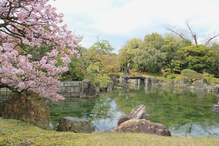 divulge: Beautiful Cherry Blossom Tree at a Garden
