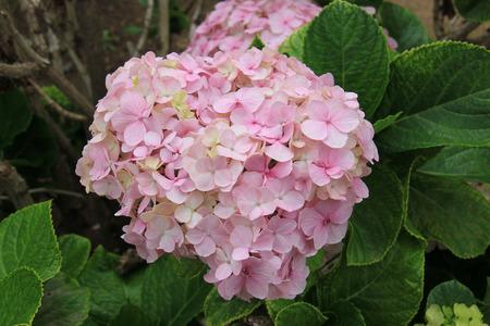 divulge: Beautiful Pink Flowers at a Garden