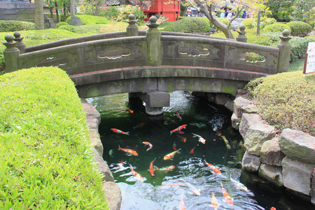 garden scenery: Tokyo, Japan - April 12, 2015: Fancy Carp Pond in Japanese Style Garden at Sensoji, the oldest temple in Tokyo, Japan.