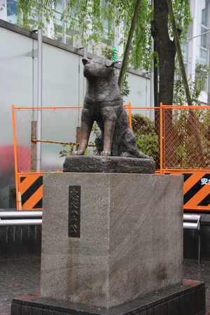 entertaining area: Tokyo, Japan - April 13, 2015: Statue of Hachiko, an Akita dog which is remembered for his remarkable loyalty to his owner, is a popular meeting spot at the Shibuya Station.
