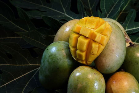 Ripe peeled and unpeeled mango on papaya leaf and space for write wording, popular sweet tropical fruit, important export product, high calories and sugar level caused diabetes and other illness