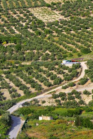 olive groves: Landscape, olive groves, Ubeda, Andalusia, Spain